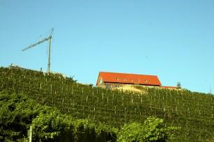 Foto auf Wildon 2008
